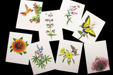 Pollinator-Note-Cards-featured