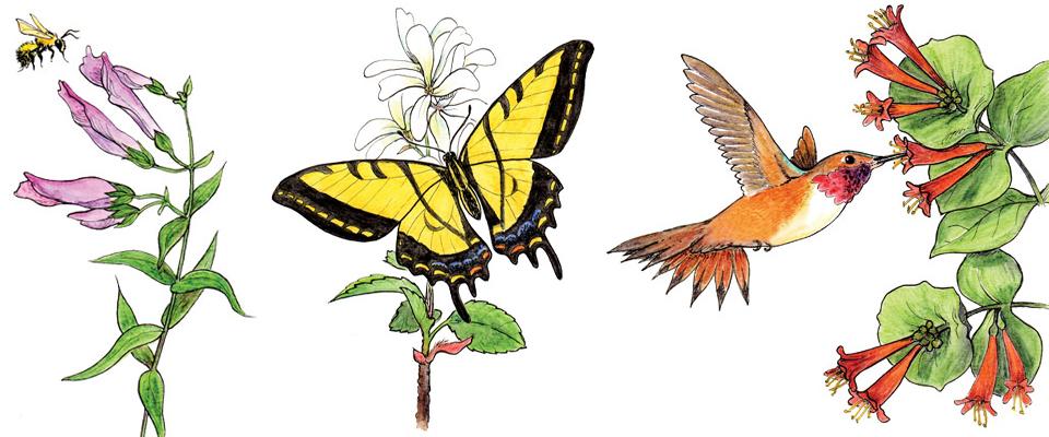 Pollinator slider